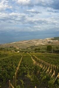 viti in basilicata