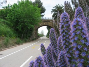 cycling path sanremo