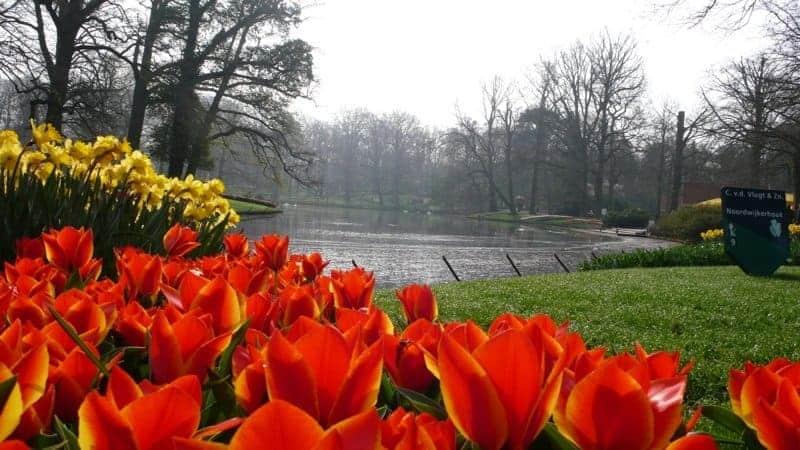 fiori olanda bici