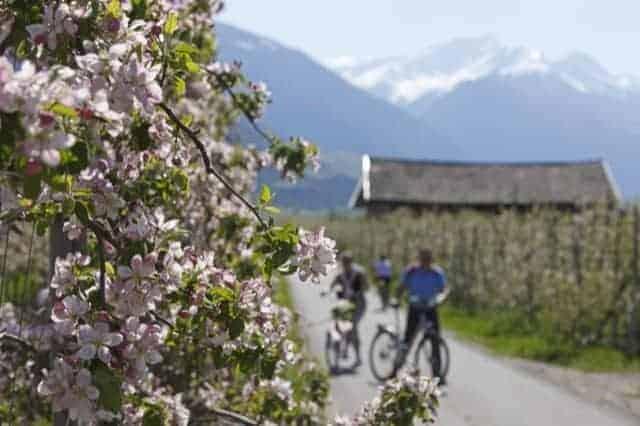in bicicletta ad asparagi