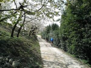 itinerario bicicletta verona