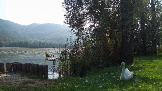 Colli Berici Lago di Fimon