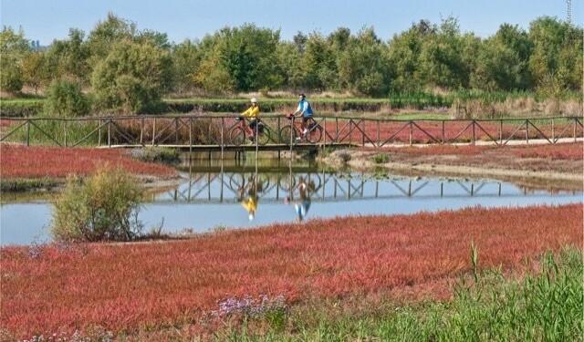 delta del po in bicicletta