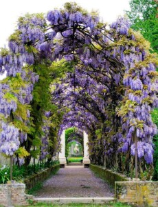 villa pisani fiori