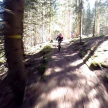 in mezzo al bosco 1