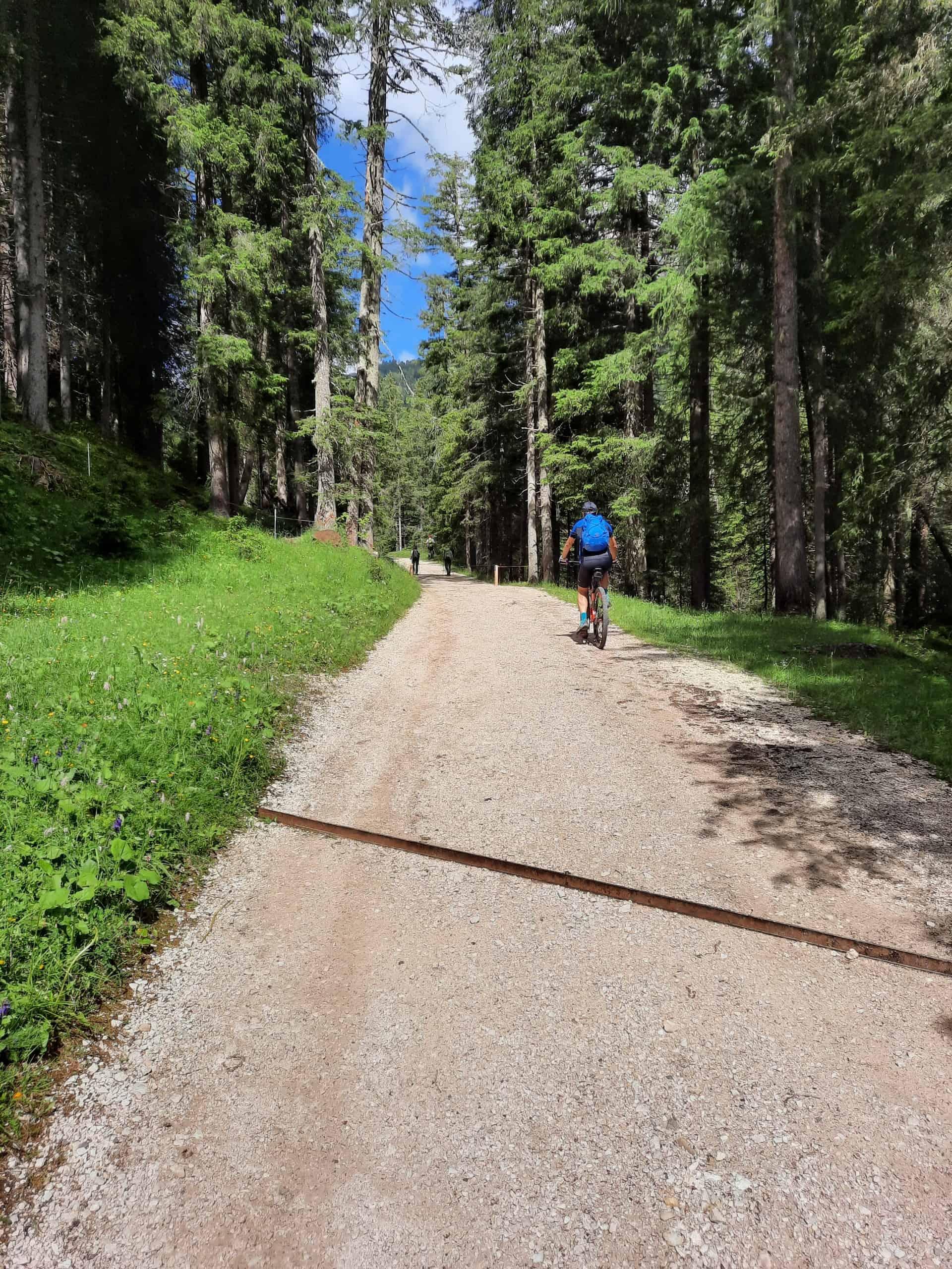 bici montagna mz